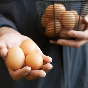 cage-free-eggs.jpg